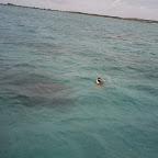 snorkeling 066.jpg