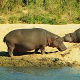 Kruger park jour5