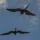 galapagos - Galapagos_FB-35.jpg