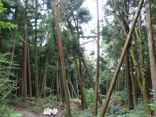 TAIWAN.Hsinchu et une minuscule partie du parc national de Sheipa, l empire du brouillard... - P1070847.JPG