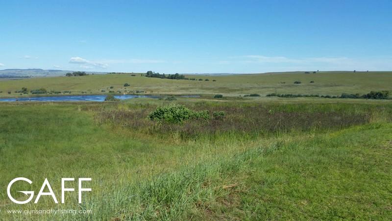 hunting-highveld-africa-dullstroom-blesbuck-blackwildebeest (2).jpg