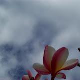 Hawaii Day 6 - 100_7635.JPG