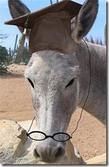 burro com oculos 300 web