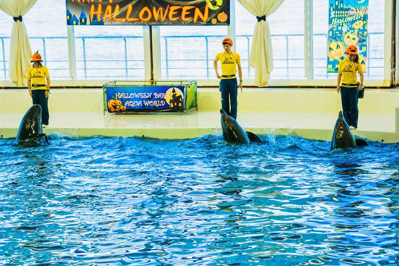 アクアワールド大洗水族館 イルカ・アシカオーシャンライブ 写真1