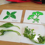 Introduction to Green Leafy Vegetables (Playgroup) 29-9-14