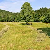 Kmetijstvo-agriculture - DSC_0640.jpg