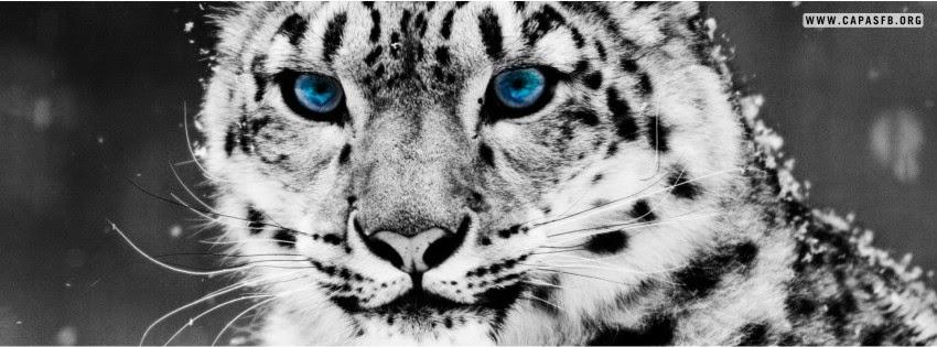 Capas para Facebook Leopardo