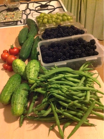 Cucumbers, gherkins, dwarf French beans, tomatoes, gooseberries and blackberries