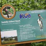 Zoo Snooze 2015 - IMG_7245.JPG