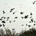 Revoar dos pássaros, conto de suspense de Marcelo Gomes