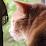 Michel Gaudet's profile photo