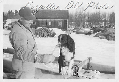 Border Collie and farm pequot Lakes