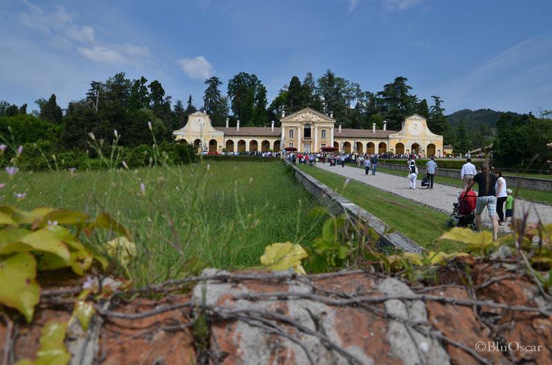 Villa Maser mostra ciliegie 03