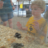 Fort Bend County Fair 2015 - 100_0313.JPG