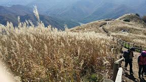 정선 민둥산