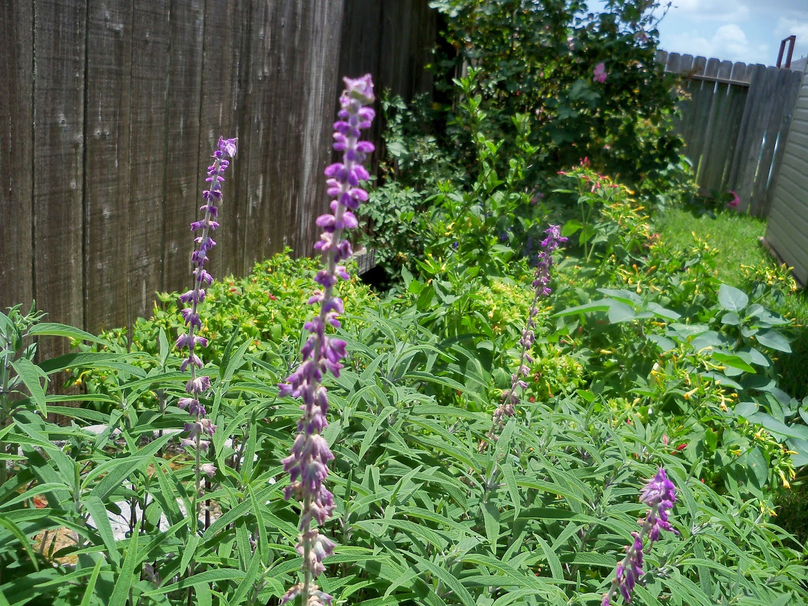 Gardening 2014 - 116_2986.JPG