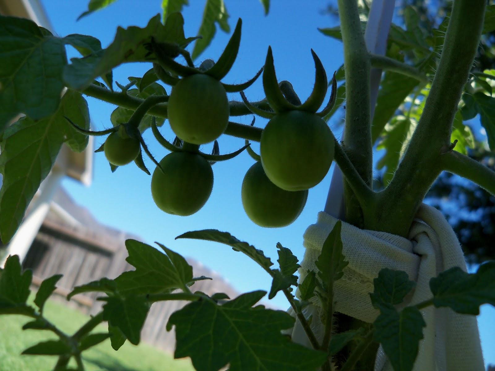 Gardening 2013 - 115_6249.JPG