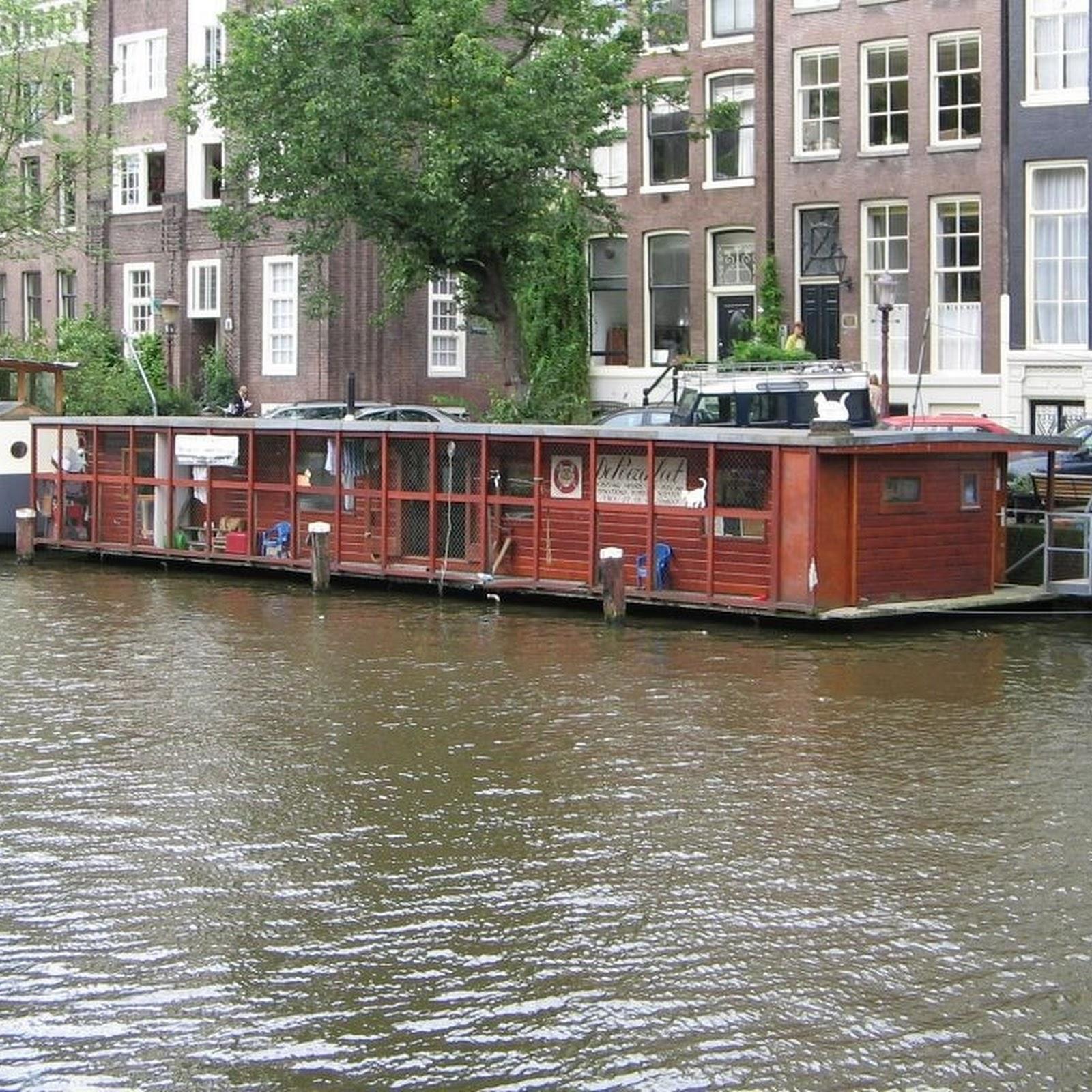 De Poezenboot: Amsterdam's Cat Boat