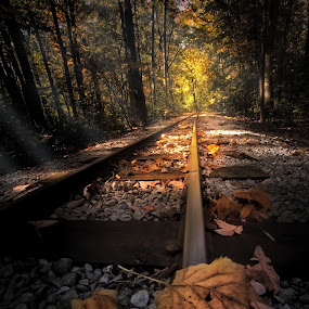 Fallow the leaves  by Sushmita Sadhukhan - Travel Locations Railway ( jungle, autumn, sunrays, leaf, railway track, sunbeam )