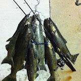 Salmon Bag.JPG