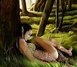 Elven Dreams