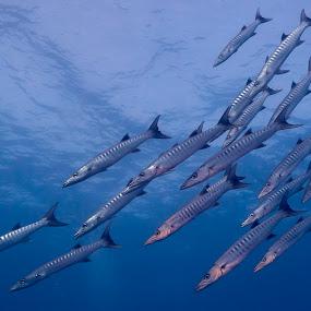 School's in by Brett Styles - Animals Fish (  )