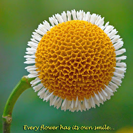 Every flower... by Asif Bora - Typography Quotes & Sentences