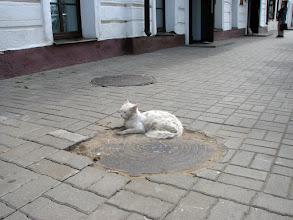 Photo: Ярославль. Уличная кошка