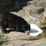 Pittsburgh Zoo Revisited - DSC05197.JPG