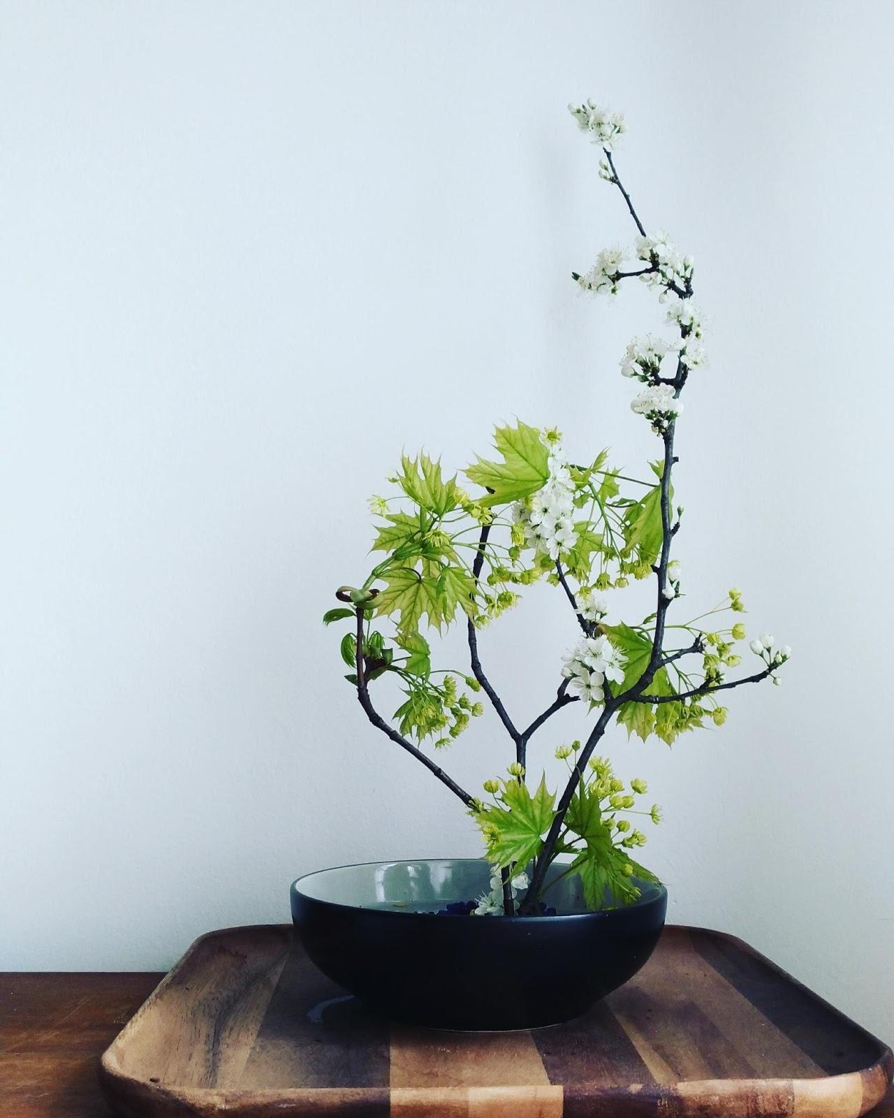 Kvetna Nedele
