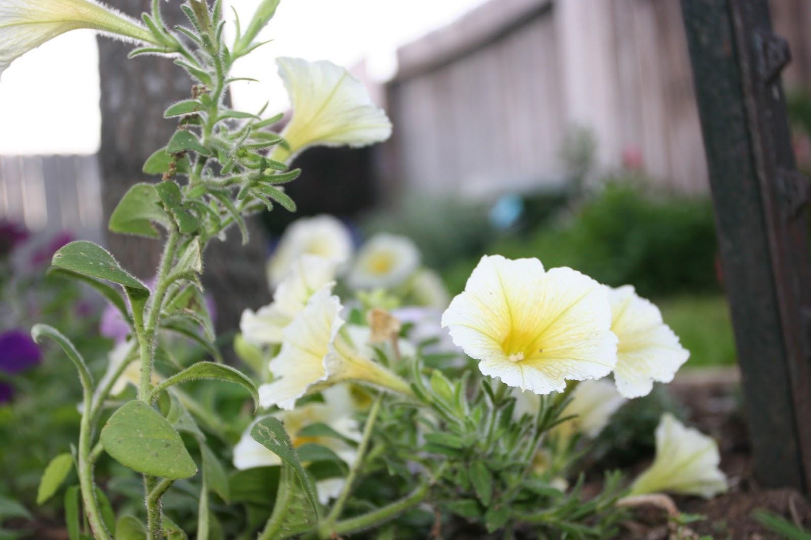 Gardening 2012 - IMG_2750.JPG