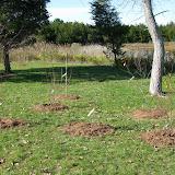 Hammo Planting - Shannon Schiesser - IMG_4950.JPG