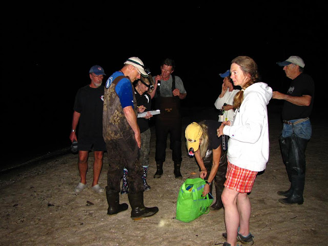 Project Limulus 2011 - Amy_Hopkins1.JPG