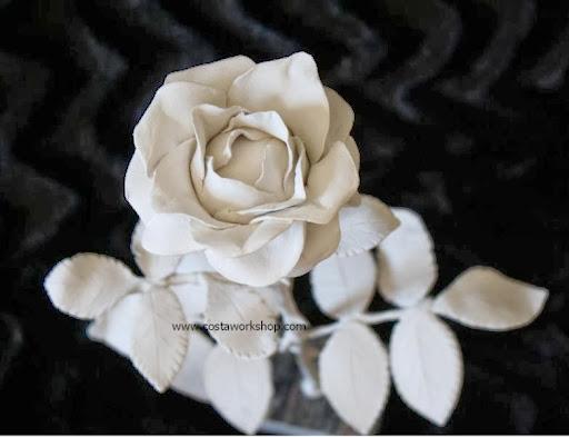 Witte Rozenkop w.jpg