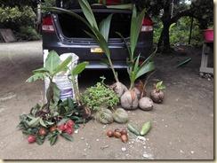 buah di sedim (2)