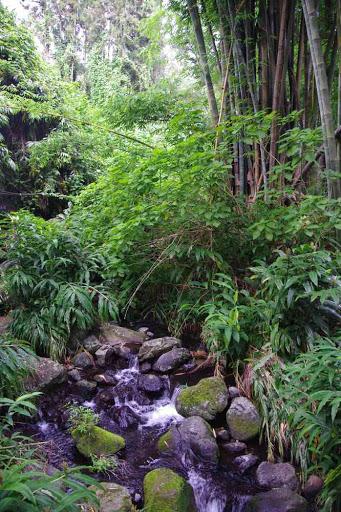 Forêt de bambous près d'Hell-bourg.