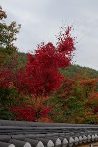 주왕산:절골-가메삼거리-내원마을-상의주차장