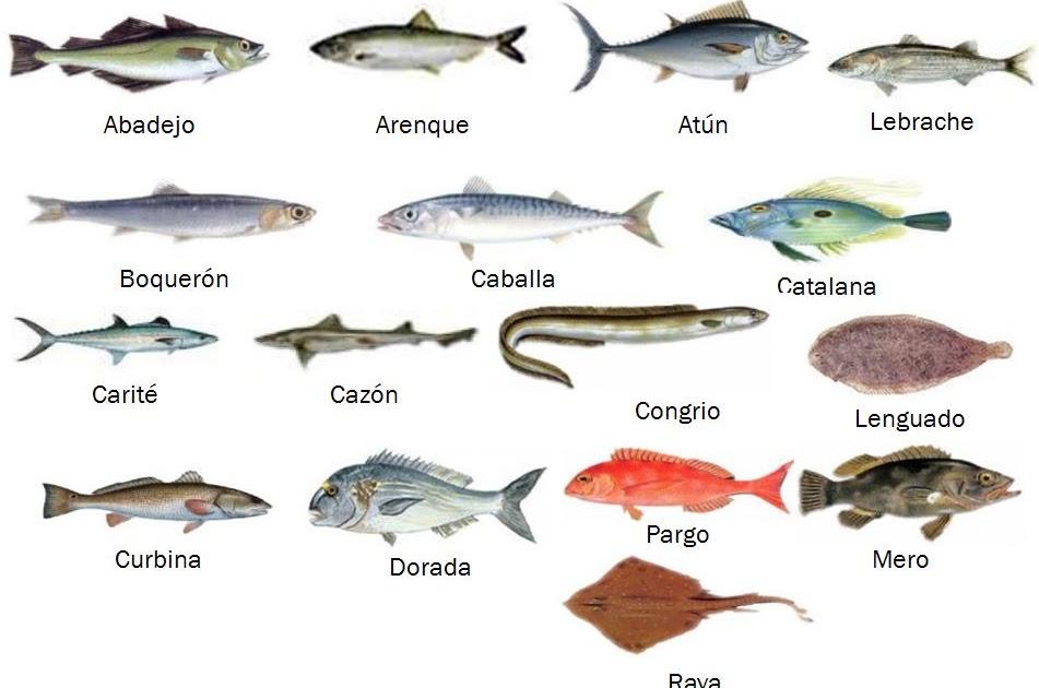 La cuisine de l 39 avenir clasificaci n de los pescados for Variedad de peces