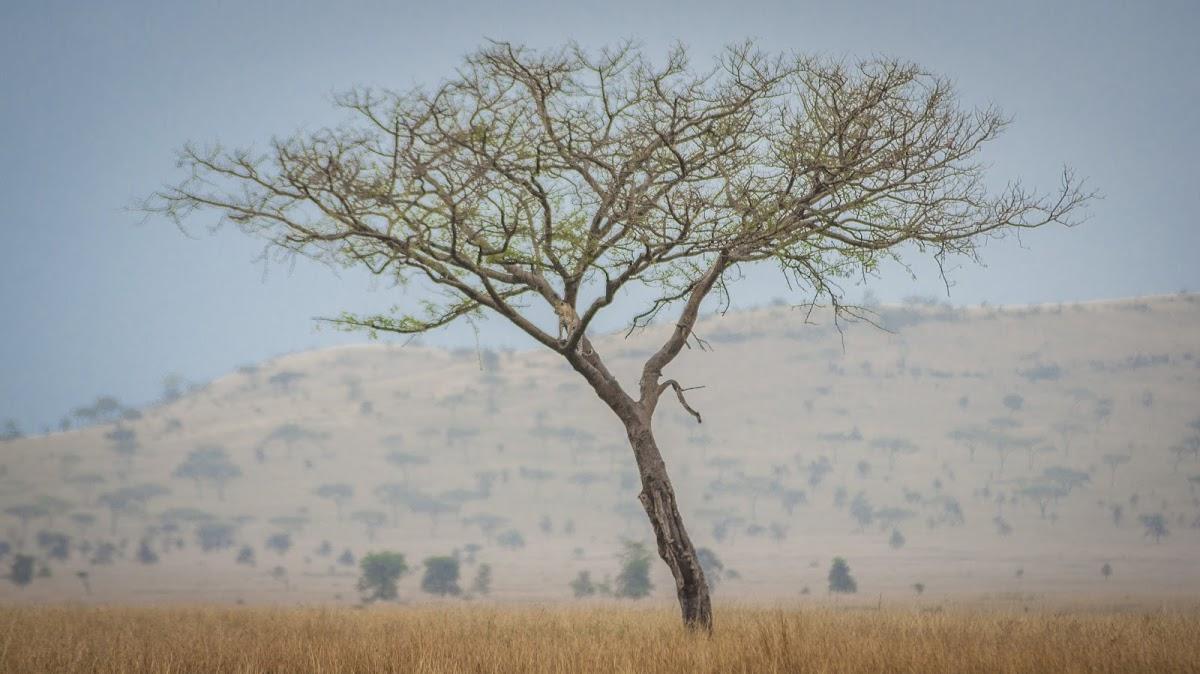 TanzaniaDSC03097.jpg