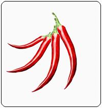 คำศัพท์ภาษาอังกฤษ_red pepper_Vegetable