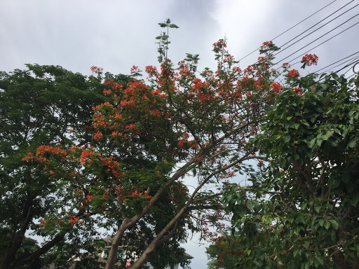 The flower of Hot season and the evening sky at my home.❤️🎈🍁🎀 - 1