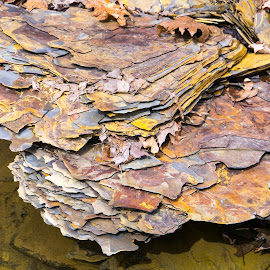 Shale by Jon Harvey - Nature Up Close Rock & Stone ( rock, shale, color, riverside, ohio,  )