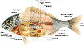 partes peces