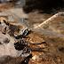 Estudo revela queda drástica na população de insetos aquáticos na bacia do rio Paraná