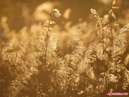 BST hình nền bông cỏ lau đẹp mộc mạc hoang sơ mượt mà giữa vùng quê yên ả