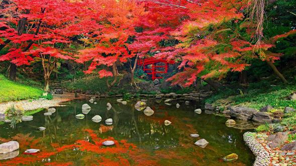 Jardín japonés con flores rojas