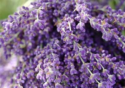 Альбом пользователя strizhi28: Пыльца лаванды