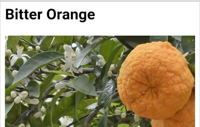 Botanical name of bitter orange and its medicinal uses