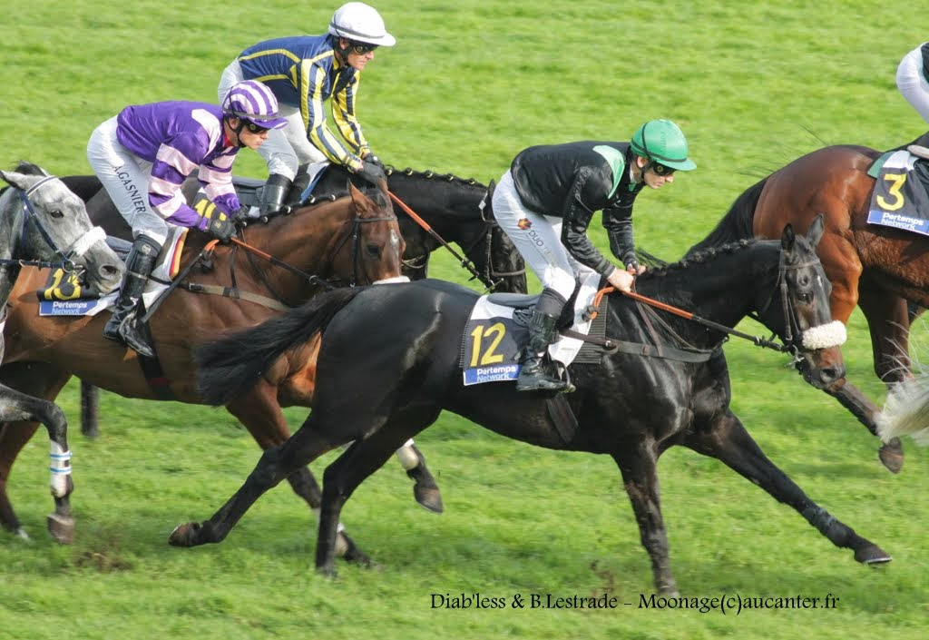 Photos Auteuil 2-11-2014 (48h de l'obstacle) IMG_5522