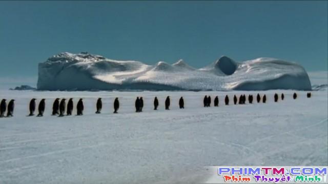 Xem Phim Hành Khúc Chim Cánh Cụt - March Of The Penguins - phimtm.com - Ảnh 3